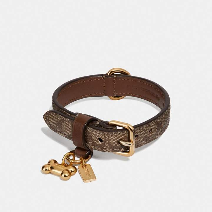 National Puppy Day: Cutest Accessories for Pets