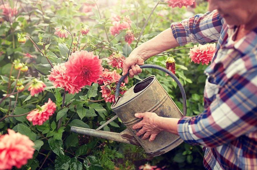 Gardening 101: The Best Gardening Tools and Clothes According to Those Who Use Them