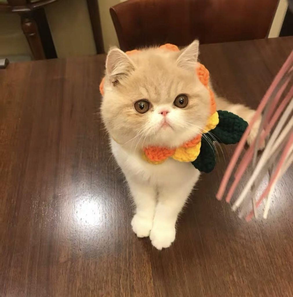 Cutest Halloween Costumes for Pets
