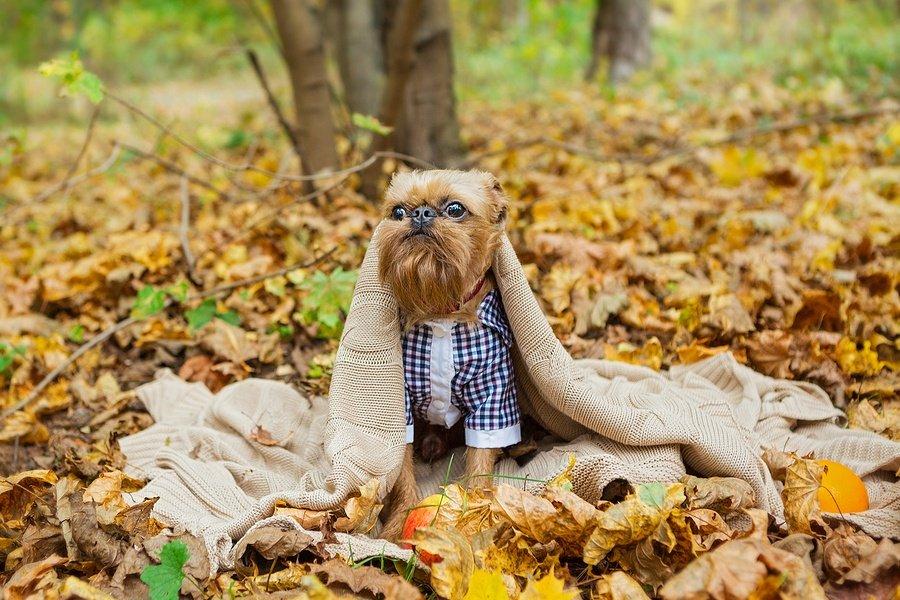 Fall/Winter Trend: Plaid Fashion for Pets!