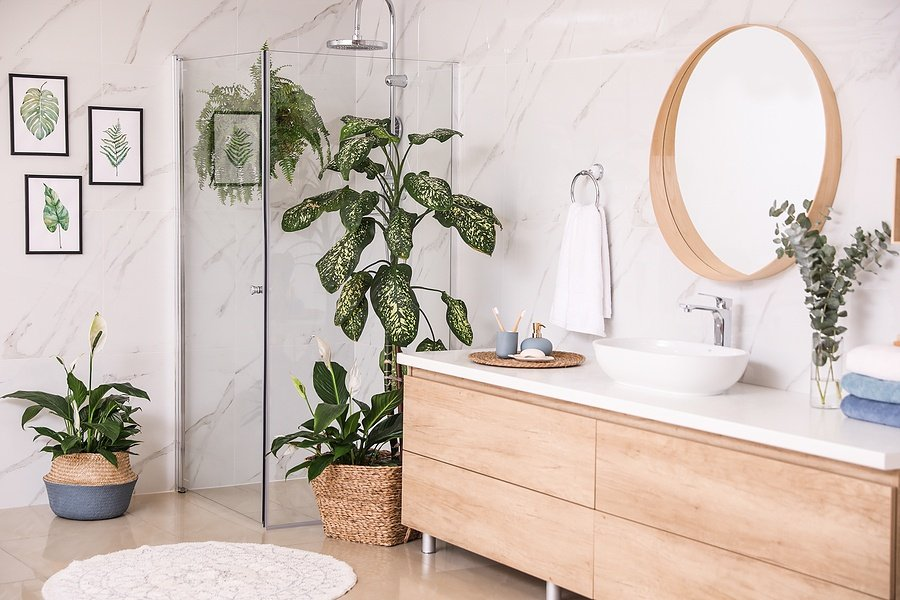 How to Grow Plants Inside Your Bathroom