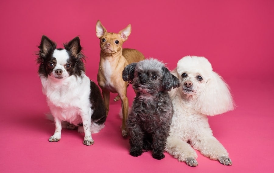 Dog Appreciation Day: The Best Products for Dogs According to Fur Parents